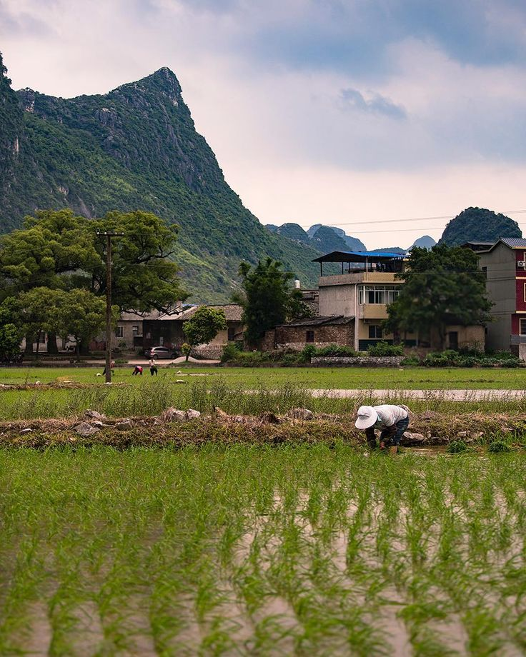 76/365. There's something very calming and satisfying seeing people work in paddy fields. It feels like real life.