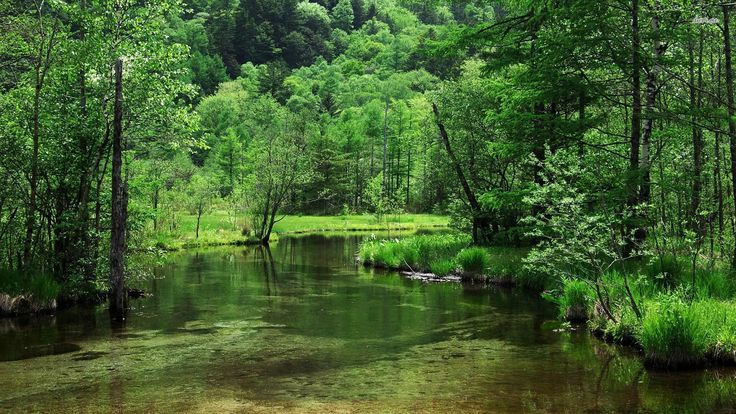 11806-forest-in-the-kamikochi-mountains-japan-1920x1080-nature-wallpaper.jpg (1920×1080)