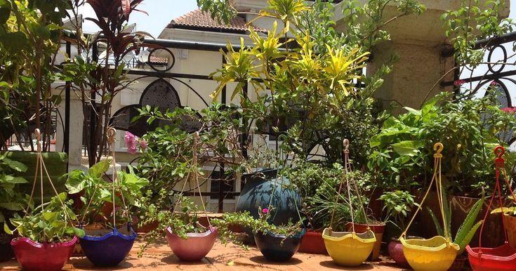 Hängende Körbe in meinem kleinen Balkon Garten – ideen Baum – Kleiner Balkon