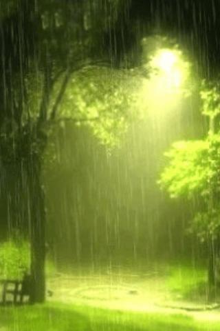 Green Light breaking through the Rain