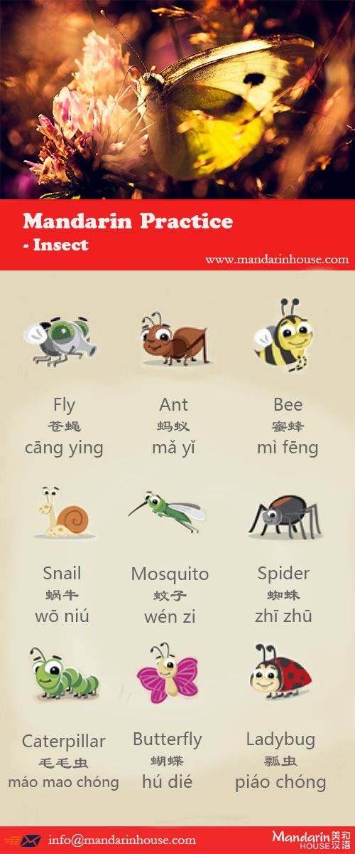 Insect Sports in Chinese.For more info please contact: bodi.li@mandarinhouse.cn The best Mandarin School in China.