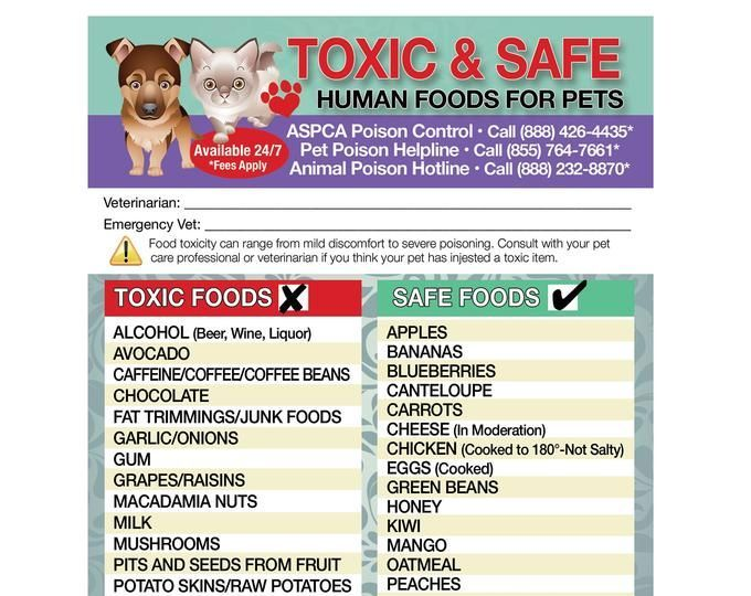 Poisonous Toxic Plants Flowers Trademarked For Pets Dogs Cats Emergency Home Alone 5 X 7 Veterinarian Approved Fridge Safety Magnet Dangerous Foods For Dogs Cat Emergency Pet Emergency