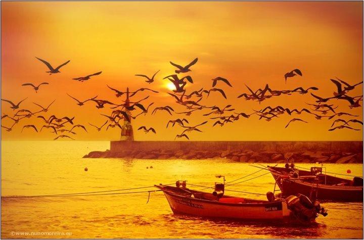 Sunsets @ Porto    Photo by Nuno Moreira  www.facebook.com/oportocity