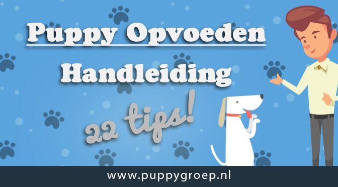 Hoe vaak moet een puppy eten? Hoeveel moet een puppy eten? Download gratis het complete voedingsschema voor je puppy van De Puppy Groep. Super handig!