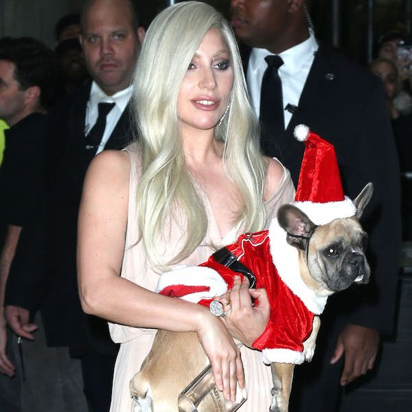Lady Gaga And Fiancé Taylor Kinney Show Off Their Festive Furbabies - http://oceanup.com/2015/12/13/lady-gaga-and-fiance-taylor-kinney-show-off-their-festive-furbabies/