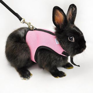 Rabbit Pet Lover: Niteangel Soft Harness with Lead for Rabbits