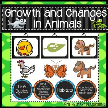 Product Description: Grade Two Understanding Life Systems: Growth and Changes in Animals **Meets Ontario Curriculum Expectations** 140 Page Unit This Product Includes Worksheets on: Characteristics of Animals Classes of Animals: Birds Classes of Animals: Fish Classes of Animals: Insects Classes of Animals: Mammals Classes of Animals: Reptiles Classes of Animals: Amphibians *ALL CLASSES of animals include: a mini book (quiz, facts, characteristics, word search, identify the animal, life…