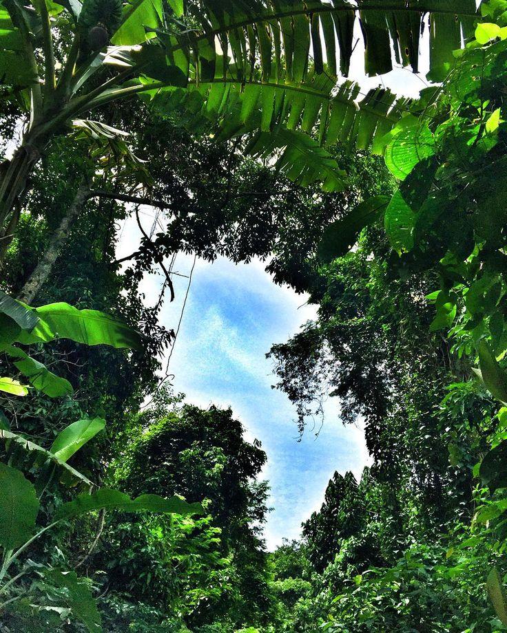 """""""No es lo típico del lugar pero amé la vegetación #Brasil #Vacation #Vacaciones #Noviembre #November #Vegetacion #IlhaGrande #Paseo #Tour #Paisaje…"""""""