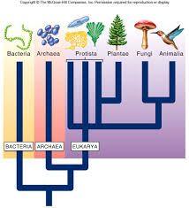 Image result for domains biology