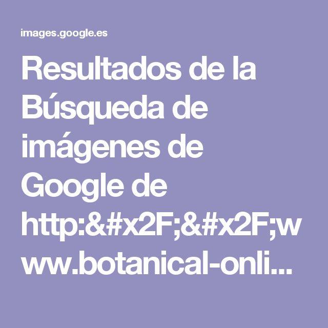 Resultados de la Búsqueda de imágenes de Google de http://www.botanical-online.com/fotos/plantasmedicinales/verdolaga3.jpeg