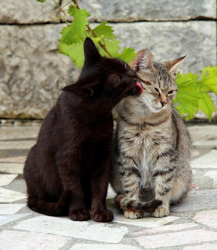любимые коты фото разве что носу