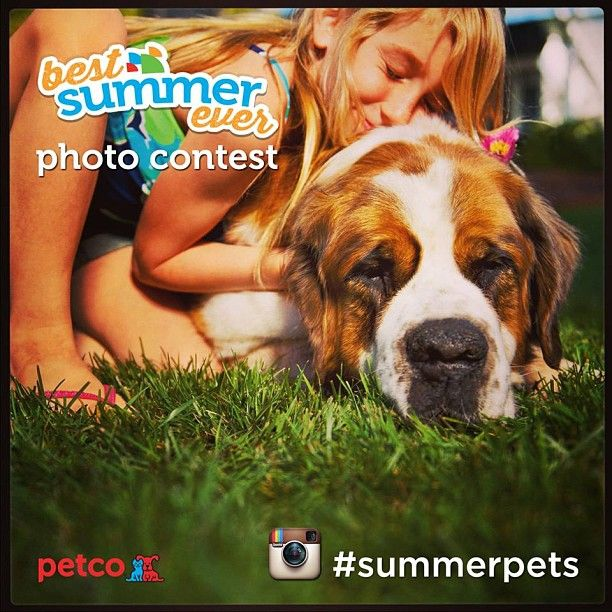 Petco 'Best Summer Ever' Instagram Photo Contest - Come Wag Along
