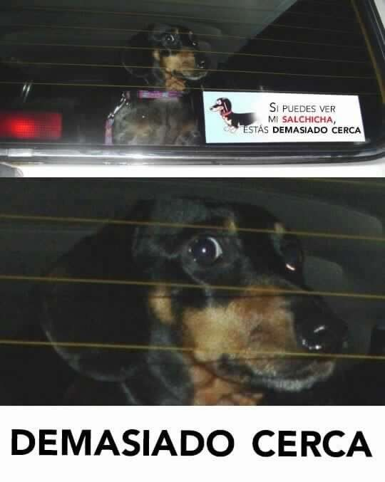 Pin By Mathias Lepore On Compilaciones De Humor Silly Animals Funny Memes Spoiled Pets