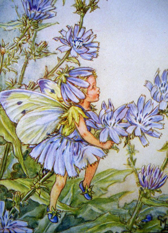 1930s CHICORY FAIRY Cicely Mary Barker by sandshoevintageprint