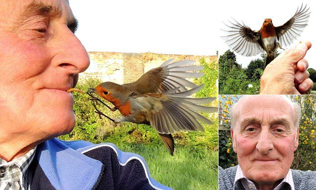 Bird-loving widower, 73, feeds robins from his mouth #DailyMail