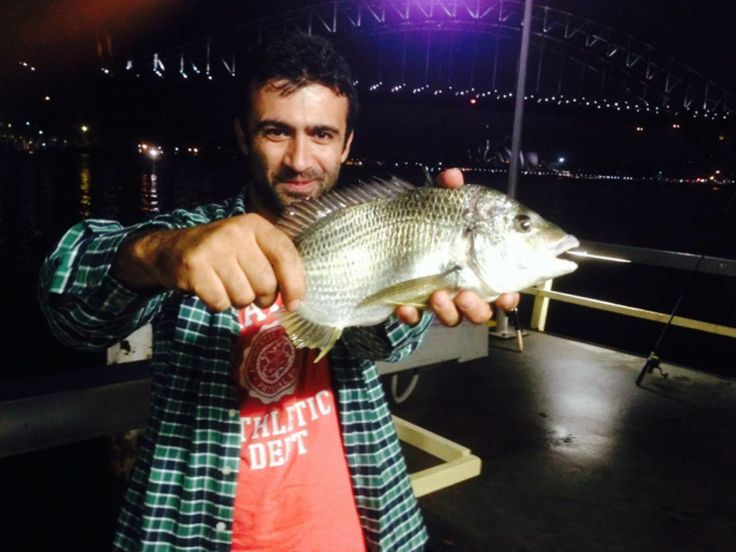 Catchability's first Sydney Opera House and Sydney Harbour Bridge! Yellowfin bream caught by Murat with a squid. Nice photography.