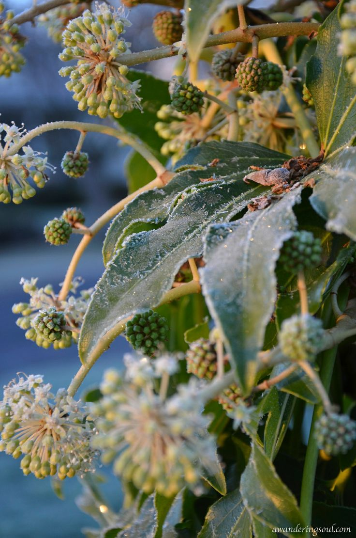 Ethereal landscapes nature photography by donna geissler - Frosty Berries