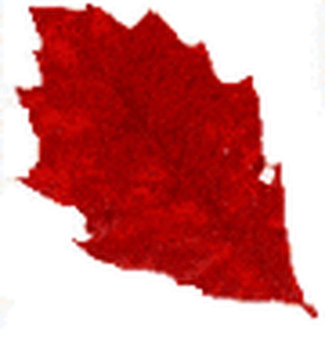 New England Fall Foliage - Red Fall Leaf