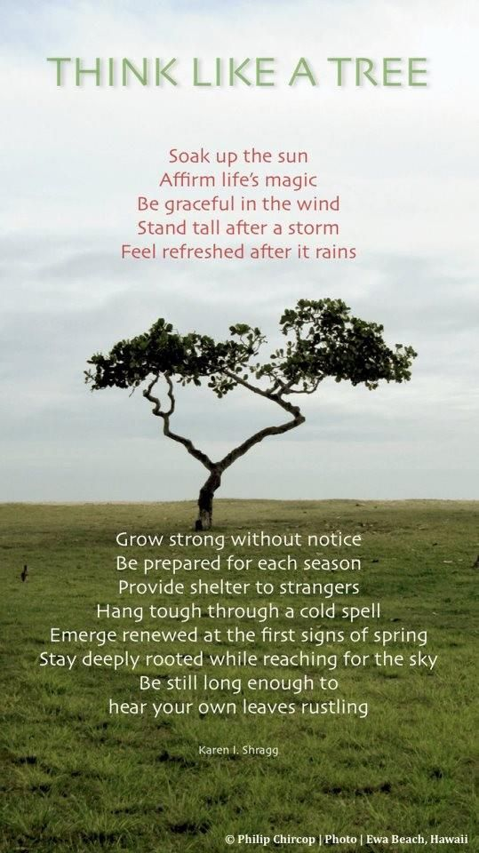 If you start thinking like a tree, you will find strength again.