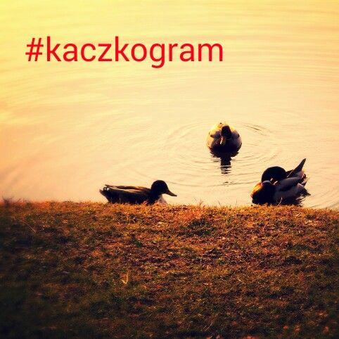 #kaczkogram #duckstagram ⭐#kaczki #plywaczki #ducks #parkpoludniowy #wroclove #wroclaw #dolnoslaskie #dolnyśląsk #polska #poland #lubiepolske #natura #natura #staw #pool