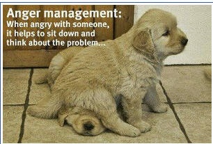 One of those days...........Animal Art, Funny Dogs, Cute Or Inspiration Pictures, Personalized Development, So True, Funny Quotes, Anger Management, Otherstuffilik, Popular Personaldevelop