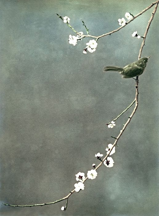 Keep a green bough in your heart, and the singing bird will come. {Chinese proverb}