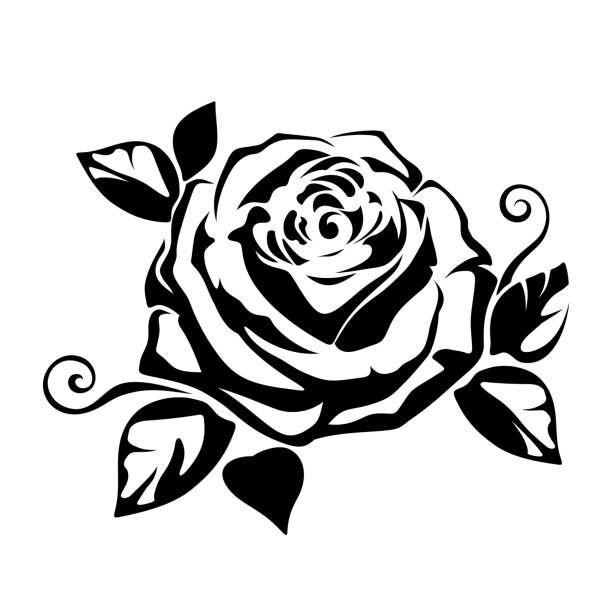 vector black silhouette of a rose on white background illustration auge vektor