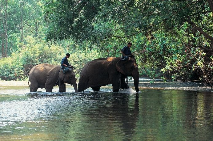 ear.  Approximately 60 km north of Chaing Mai; the Elephant Nature Park