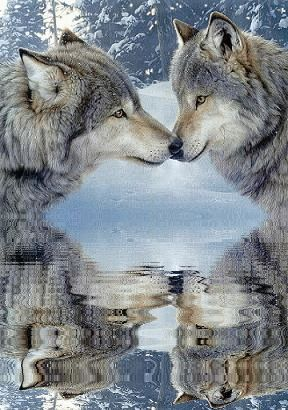 """Wolves: """"Reflected Love."""""""