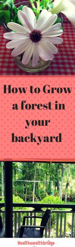 How to grow a forest in your backyard is not a question everyone has.It definitely is not something which keeps people awake.But do you know the changein forest cover can change the local climate? Did you know one man, has given up a lucrative job, to plant trees and create man-made sustainable forests?I wish to …