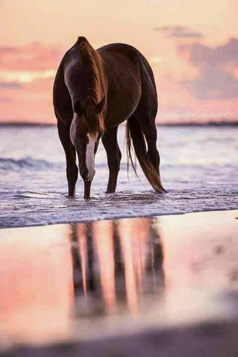 Stunning horse at the beach ~*~My Pleasure~*~