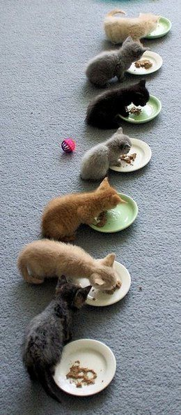Suppertime for the cats in my backyard looks just like this (minus the carpeting of course).
