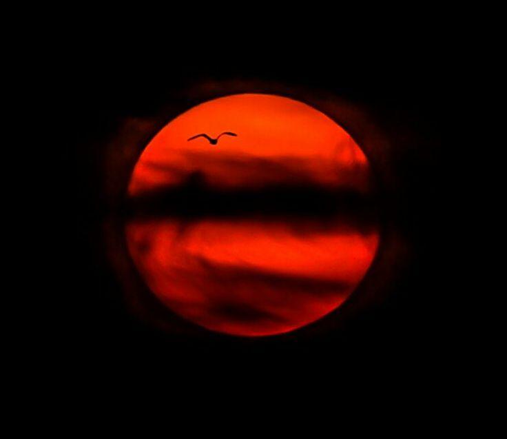 The Sun ¤