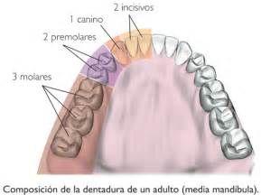 Pesquisa Como prevenir a gravidez molar. Vistas 161841.
