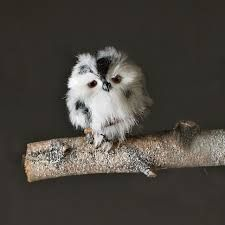 Image result for cute baby owls