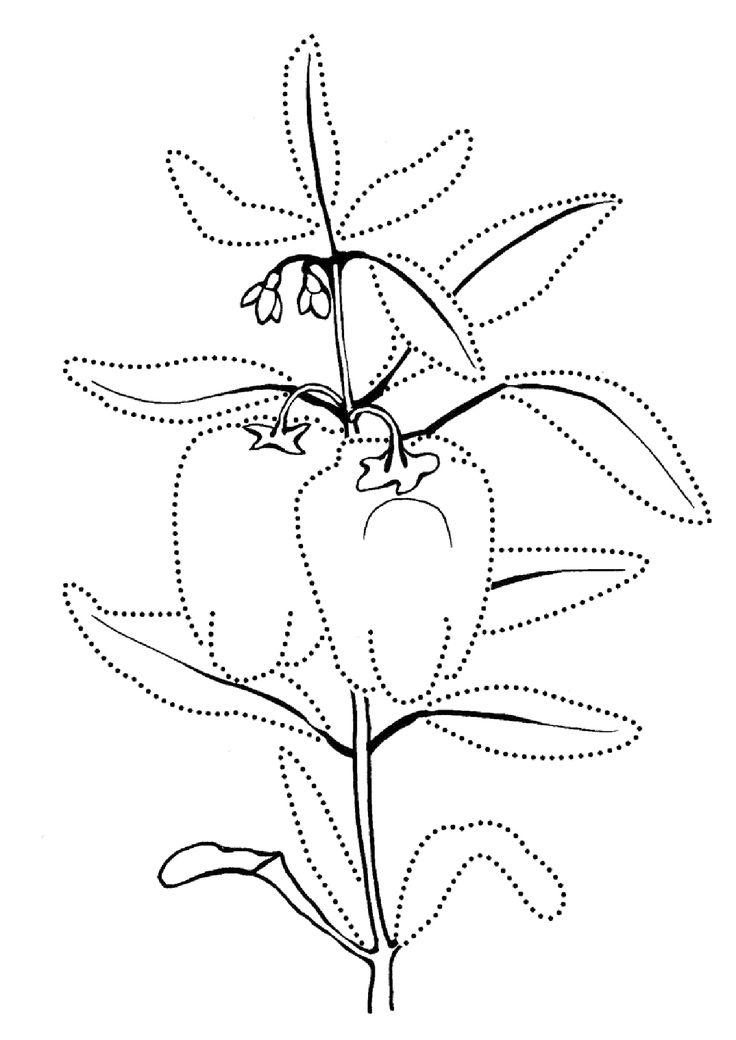 Как сделать овощи и фрукты из бумаги | Раскраски ...