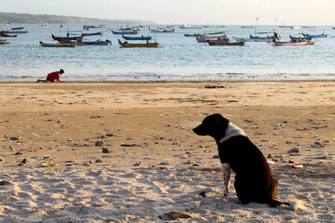 July 2013 - Indonesia - Bali - Jimbaran - It is a strange dog...