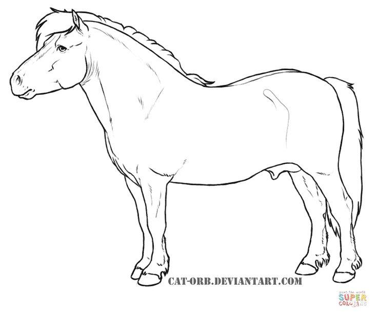 Shetland Pony Super Coloring