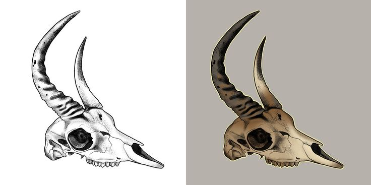 #animal #skull #drawing #art #tattoo #design