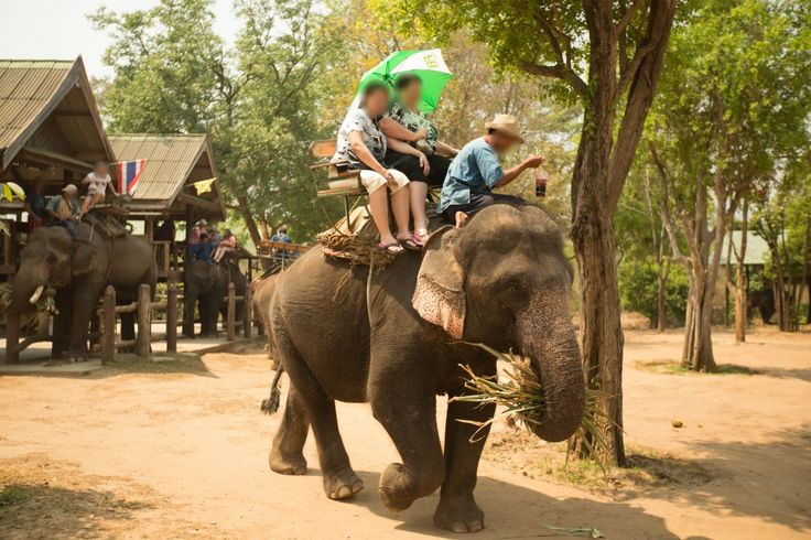 Thailand's Cruel Captive Elephant Industry | Animals Used for Entertainment | Issues | PETA Asia