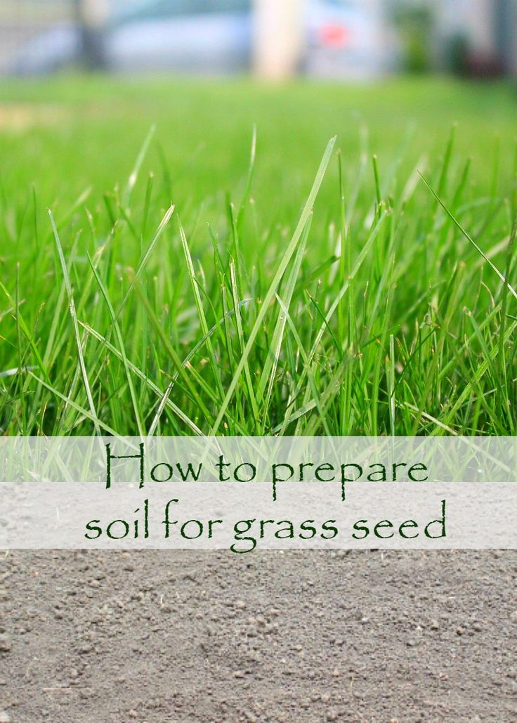 Prepare Lawn For Winter best 25+ growing grass from seed ideas on pinterest | yard