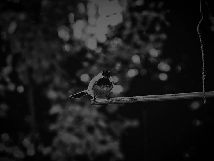https://flic.kr/p/A7tQu5 | Disguised within the backdrop does not mean that one remains hidden. #secret #blackandwhite #scenery #shadow #bird #feathers