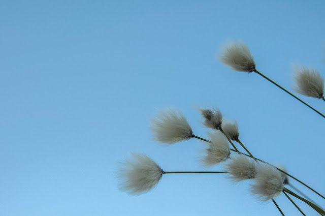 Kesätuulen lempeä laulu soi:   Iltalaulu Siellä missä kukkii luhtavillamissä ku...