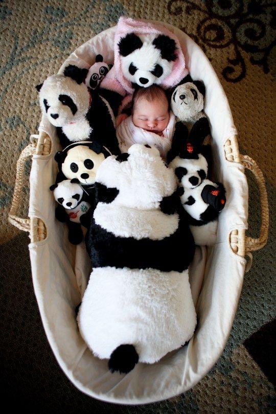 1000 Images About Pandas On Pinterest