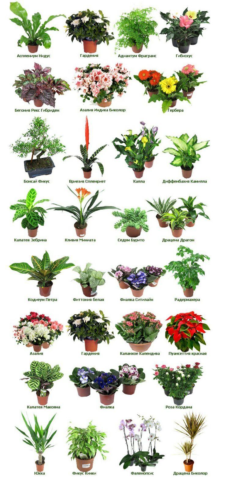 второе блюдо цветы срезанные список по алфавиту с фото видите