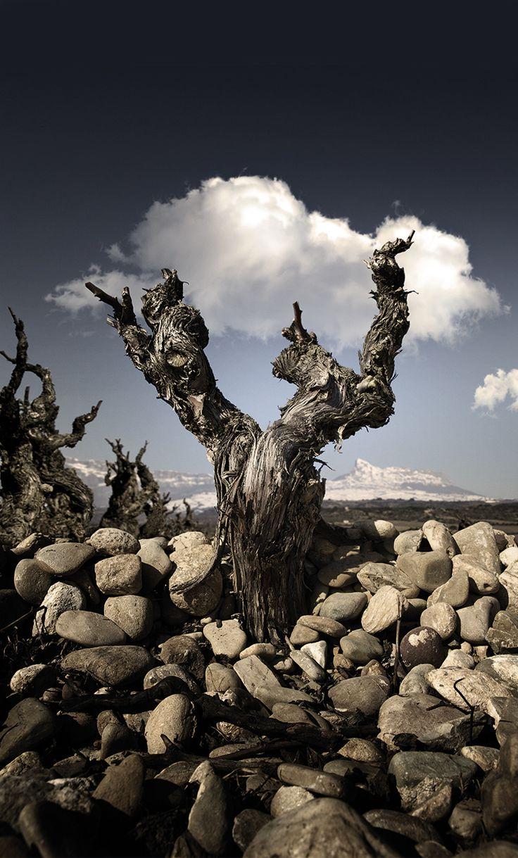 Bodegas LAN | Vinos tintos de crianza. Rioja en tres letras.