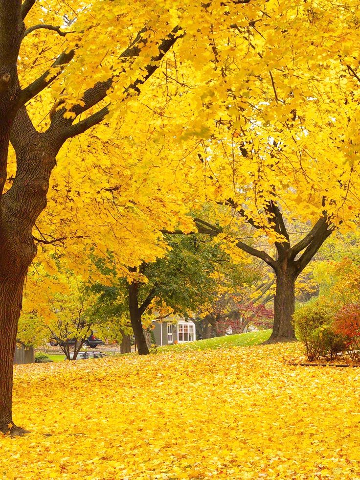 Autumn Trees Printed Photography Backdrop / 7747