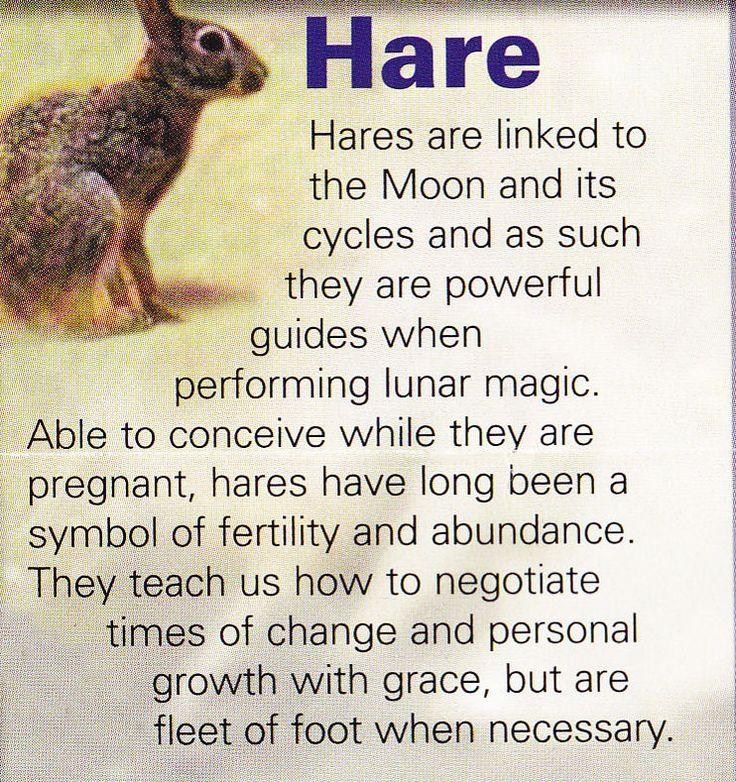 Hare = abundance, fertility, feminine energy, cycle of life (seasons), power, be ready to move fast.
