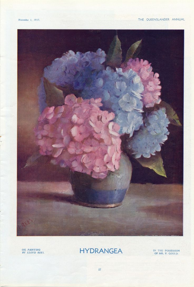 """""""An oil painting by Lloyd Rees of pink and blue hydrangeas' arranged in [probably] an earthernware bowl with a blue band around the base. """" from Discover The Queenslander at SLQ"""