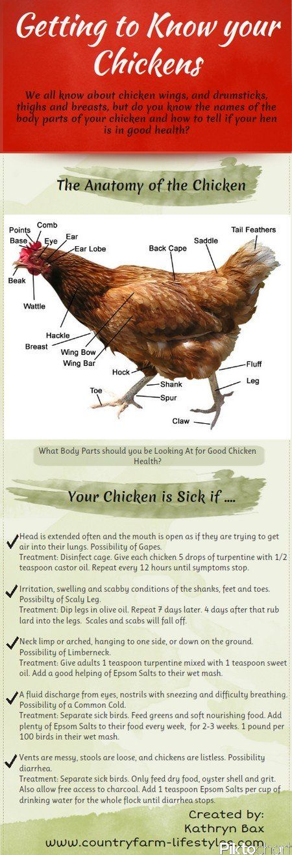 Good chart for diagnosing chicken ills.